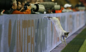 A cat jumps onto the pitch during 2009 Uefa cup final at the Sukru Saracoglu stadium, Istanbul.