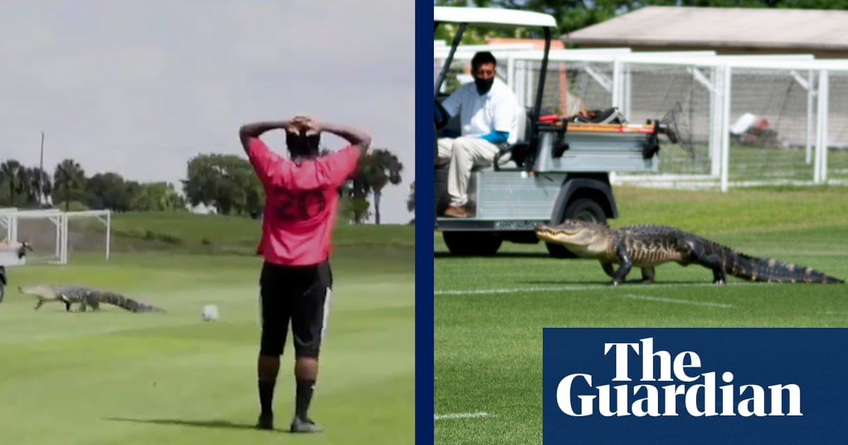 'It's good to be in Florida': alligator interrupts Toronto FC training – video