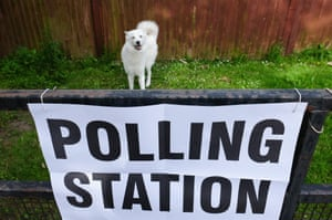#dogsatpollingstationsA dog plays on the grass next to a polling station sign attached to railings in Redcar