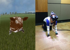 In the cow virtual reality experience, participants walked around a virtual pasture on all fours, were jabbed by a cattle prod, and told they were to be loaded on to a truck