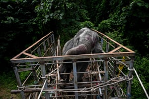 Bago region, Myanmar A veterinarian administering medicine before a wild elephant is released into the Zarmaye nature reserve. Two wild elephants, which had been foraging in villages and a highway in Yangon, were caught and released into the Zarmaye nature reserve