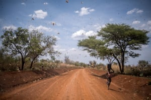 A woman walks on a dirt road in Bilayolo village surrounded by locusts
