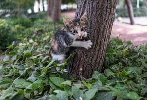 Alsancak, TurkeyA kitten clings to a tree at a stray animal shelter at Izmir International Fair park.