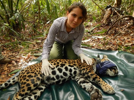 Lucero Vaca with a jaguar (Panthera onca).