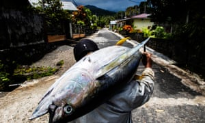 A yellowfin tuna caught by hand line off Sangihe Island in Indonesia