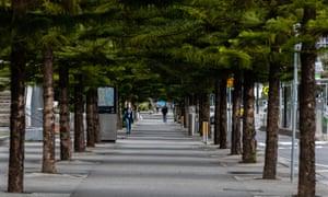 an empty tree lined boulevard