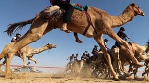 Jockeys race on camels
