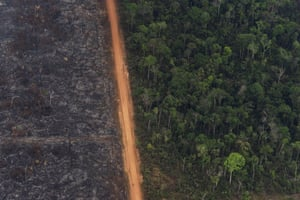 A lush forest sits next to a field of charred trees. The current fires in the Amazon were set by those who are clearing the forest for cattle ranching and crops. About 60% of the Amazon rainforest is in Brazil