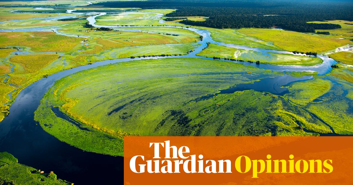 We are destroying rainforests so quickly they may be gone in