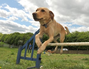 Dog going over a jump in a field