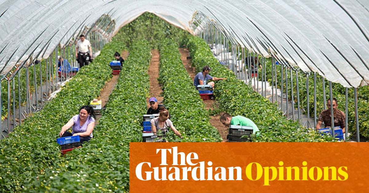 Anyone Who S Been Laid Off Can Pick Fruit Right It S Not That Simple Coronavirus The Guardian