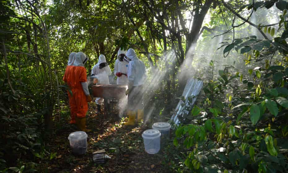 Beekeepers at work in Liberia, where there is a growing market for locally-produced honey