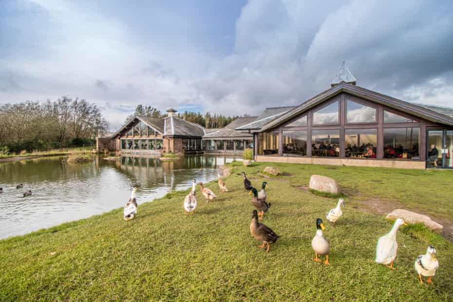 Ducks at Tebay Services