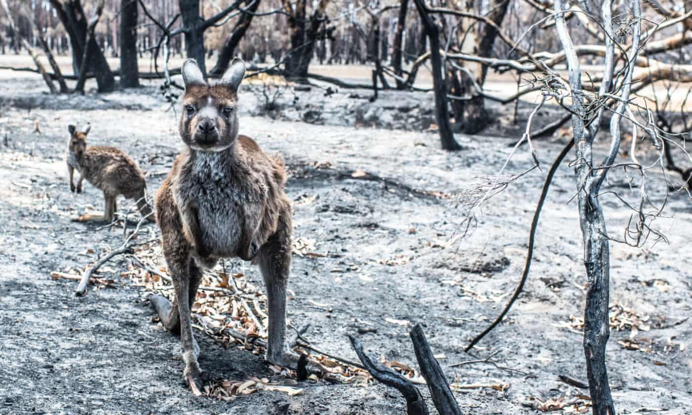 Overwhelmed Australia aid group asks inmates to stop sending kangaroo pouches