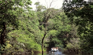 Tourists travel to the Amazon rainforest - but it is under threat from industries such as logging.