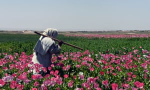 An Afghan farmer walks through a poppy field in Zari district of Kandahar province in March 2017. Poppy cultivation in Afghanistan hit a record high last year.