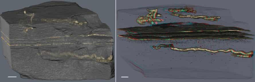 Fossilised rock