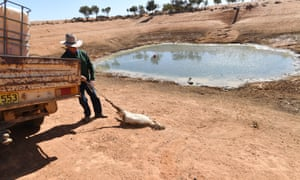 Lachlan Gall pulls a dead goat out of one of his dams, on his property in New South Wales in August 2018 during the worst drought affecting the region in a century.