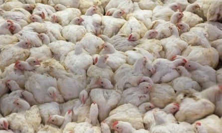 Outbreaks of bird flu are leading to poultry culls and restrictions in parts of Europe.