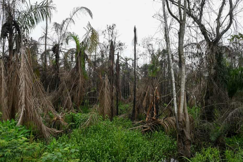 A forest charred by a recent oil fire on Ekpeye land in Nigeria's Rivers state.
