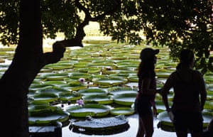 Piquete Cue, Paraguay. Visitors look at Victoria cruziana water lilies, which appear every three to four years in great numbers in the Paraguay River north of Asuncion