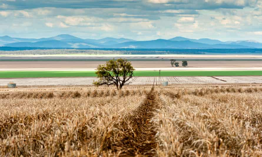 Liverpool Plains in NSW. The Gomeroi traditional owners have lost their federal court bid to protect sacred sites from Shenhua Watermark open-cut coalmine.
