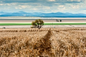 Liverpool Plains in north-west New South Wales.