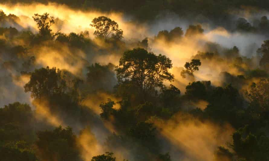 Amazon forest canopy at dawn.