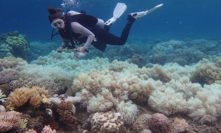 A woman scuba diving over bleached coral on the Great Barrier Reef