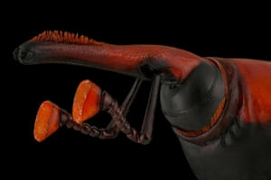 Mofeed Abu Shalwa won Luminar bug photographer of the year. This photograph is of a red palm weevil