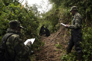 Gorilla trackers Emmanuel Bizagwira, right, and Safari Gabriel observe two gorillas from the Agasha group as they play in the Volcanoes National Park, Rwanda