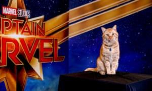 Reggie, AKA Goose the Cat, poses for a portrait for Captain Marvel in Beverly Hills, California.