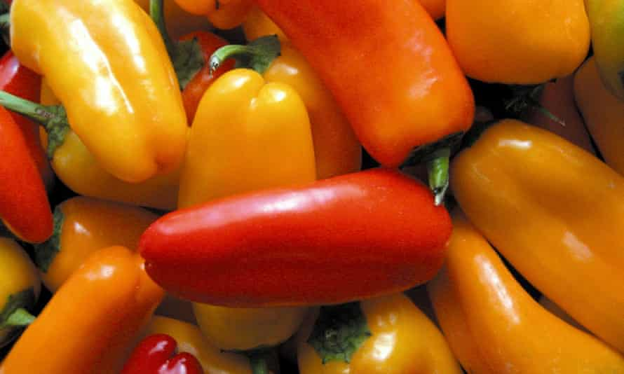 Chilli peppers were among the most popular spicy plants recorded in research on the diets of 500,000 people in China.