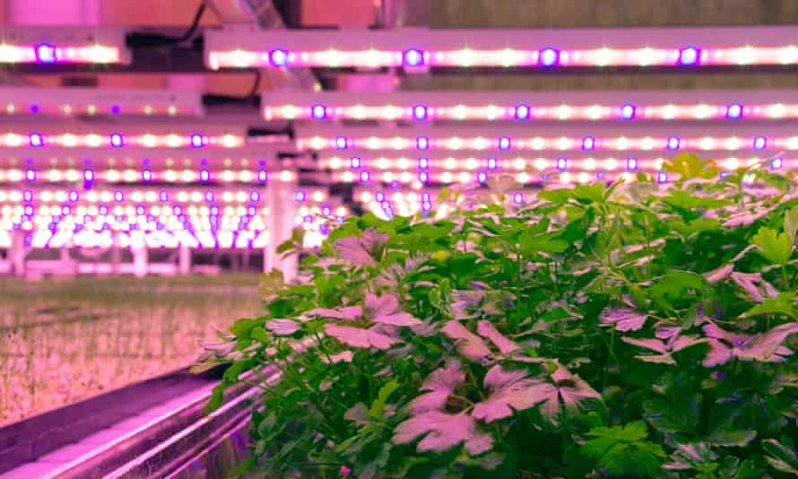 Jones Food's vertical farm in Scunthorpe, which grows fresh herbs under lights in a warehouse.
