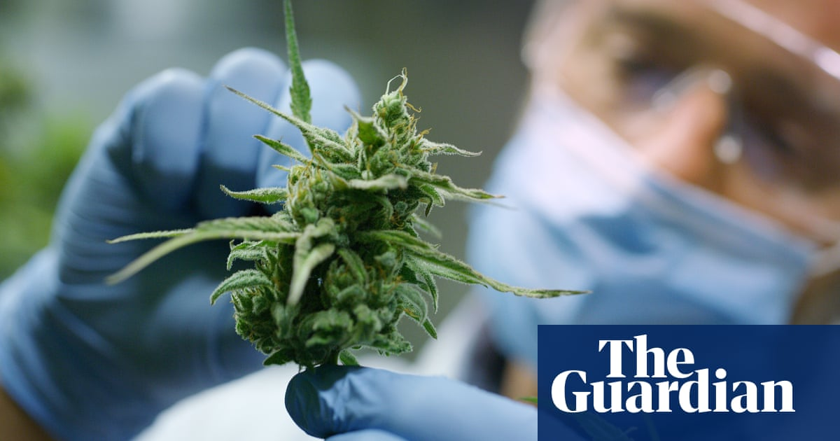 post-image-Into the light: New Zealand's cannabis growers gear up for referendum