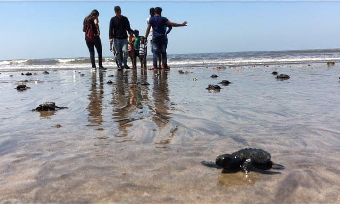 Mumbai beach goes from dump to turtle hatchery in two years | World