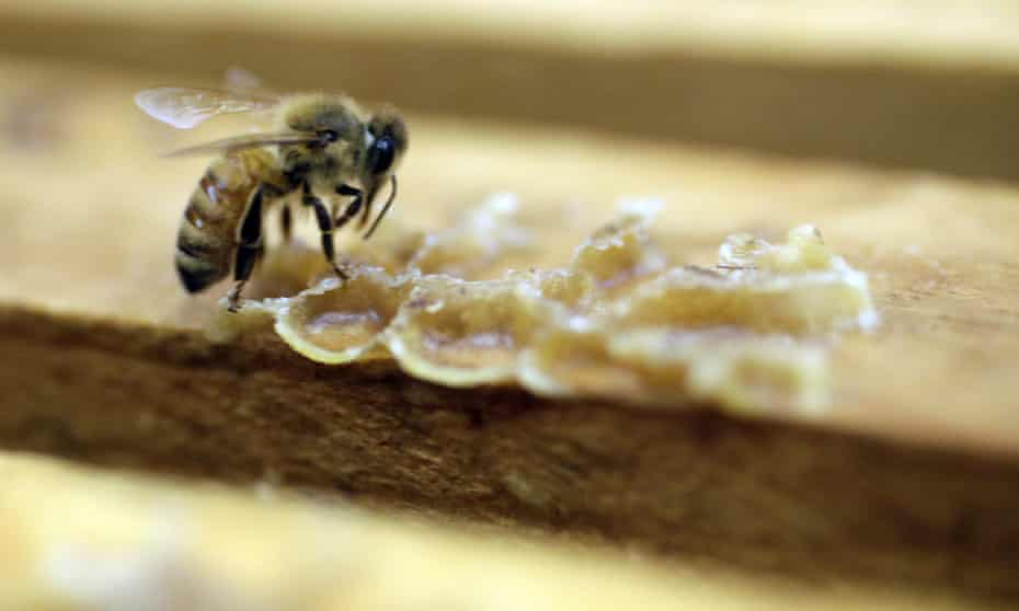 The number of managed honeybee colonies in the US has fallen from 6 million in 1947 to just 2.5m today.