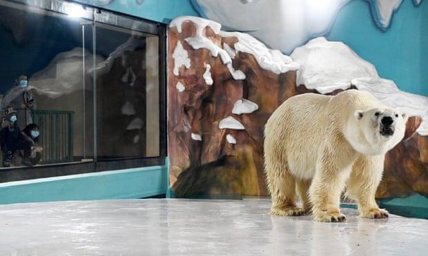 Visitors look at a polar bear in the enclosure. Photograph: Xinhua/Rex/Shutterstock