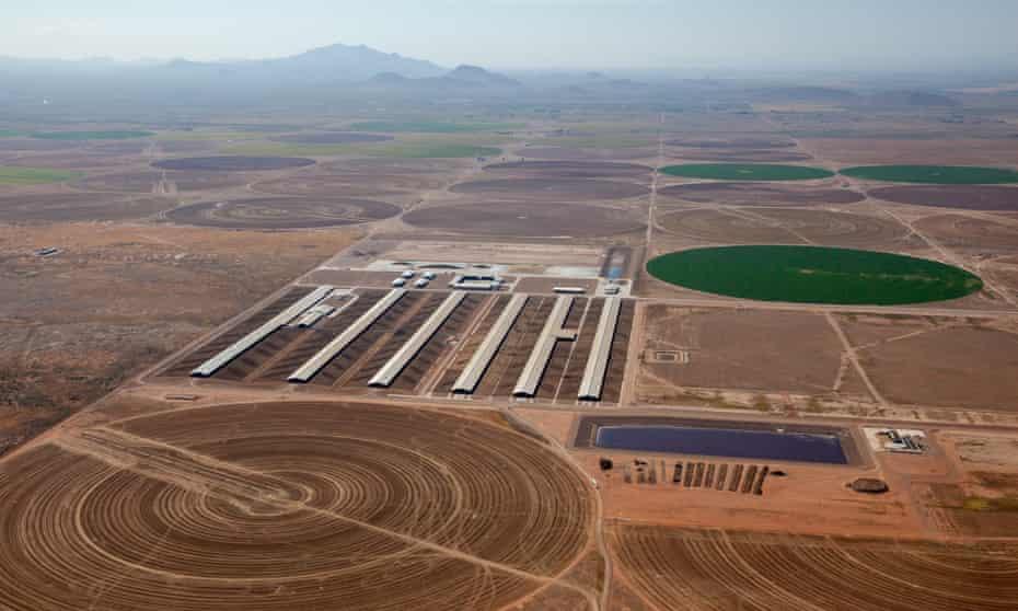 A US mega-dairy farm