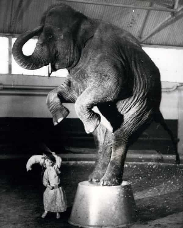 Yvonne Kruse aged two, training with an elephant at Bertram Mills Circus in 1958.