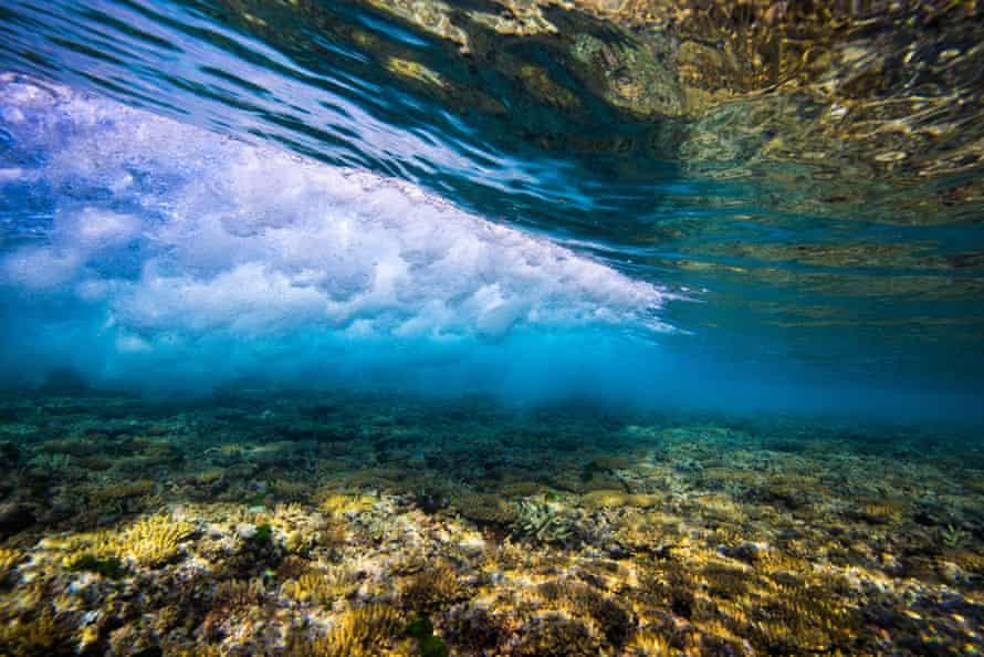 Reef surrounding Heron Island