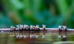 Bees drink in a garden bird bath during an intense drought in Sun City Province, South Africa