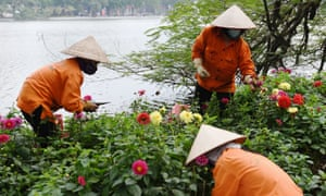 Gardeners wear protective face masks as they work at Hoan Kiem Lake in Hanoi.