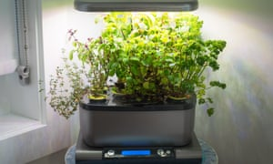 The Miracle-Gro AeroGarden, a popular home indoor garden that uses hydroponics to grow herbs and vegetables.