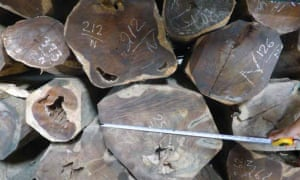 Rosewood logs from trees likely several hundred years old.