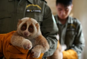 A slow loris is carried by rescue centre staff in Nanning, Guangxi Zhuang Autonomous Region, China