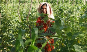 Indian woman standing in crop field