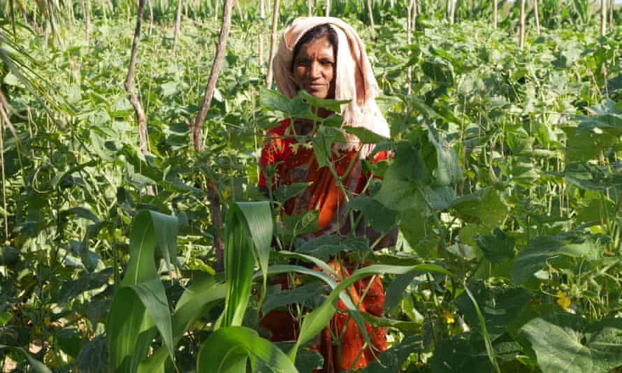 Indian woman standing in crop field