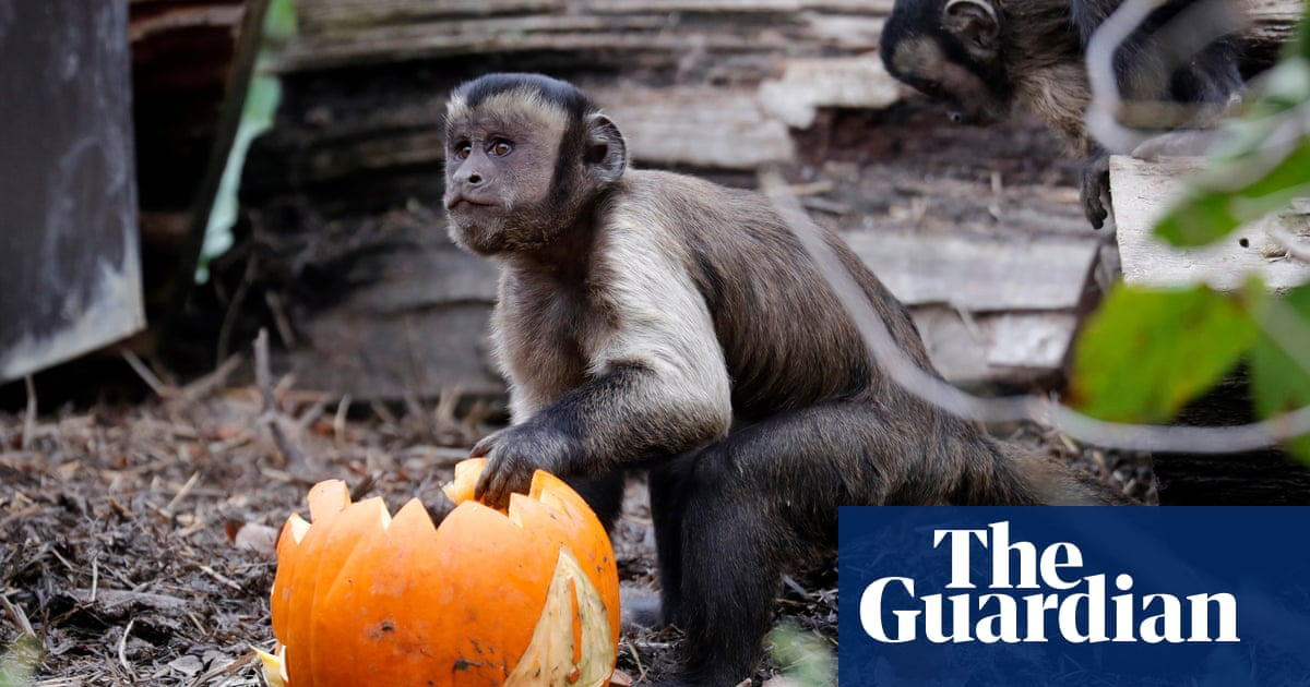 Monkeys thought to have escaped private collection on loose in Cincinnati