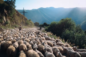 Abano mountain pass … sometimes. Shepherds with their sheep filling the road. The only way in to Omalo, this is one of the world's most dangerous roads, with steep climbs, tight turns and big drops … You can also get stuck behind shepherds moving their flocks!